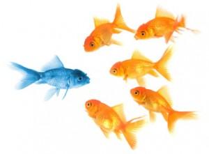 rayner-fish