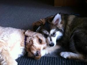 Kody & Gracie